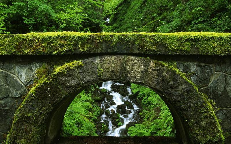 ponte e muschio
